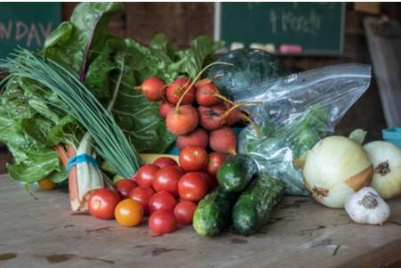 tomatoes  canning   organic
