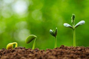 garden plants plant seedling seedlings sale